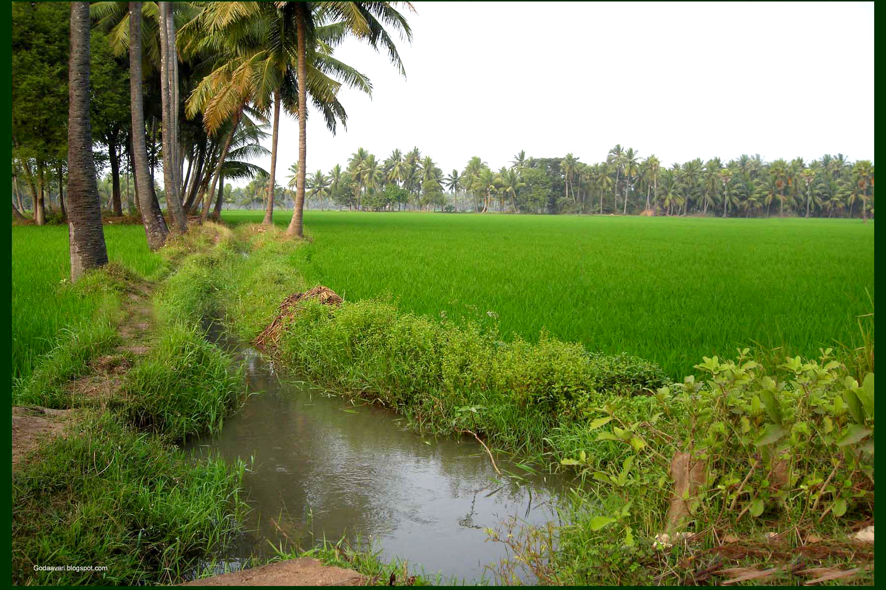 dastramVillage-West_godavari_.2